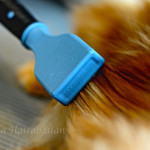 brushingcat
